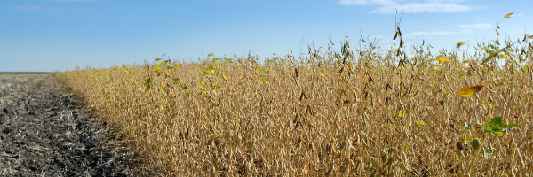 Soybean Surges & Feed Cost Fears