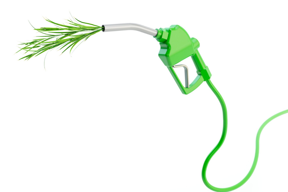 A Biofuel Boom?