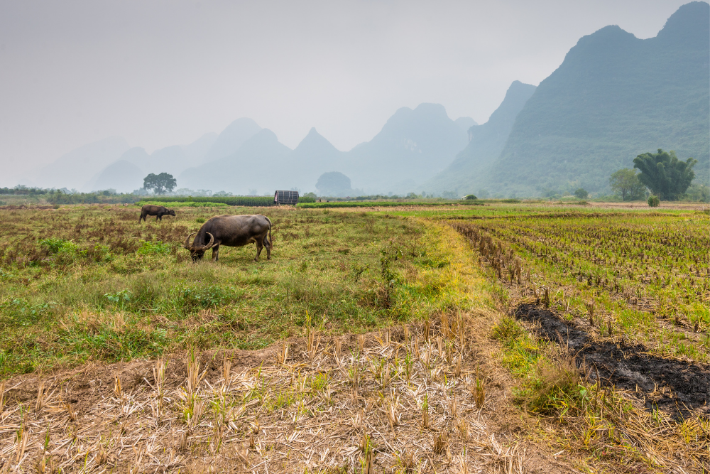 China Faces A Big AgTech Test