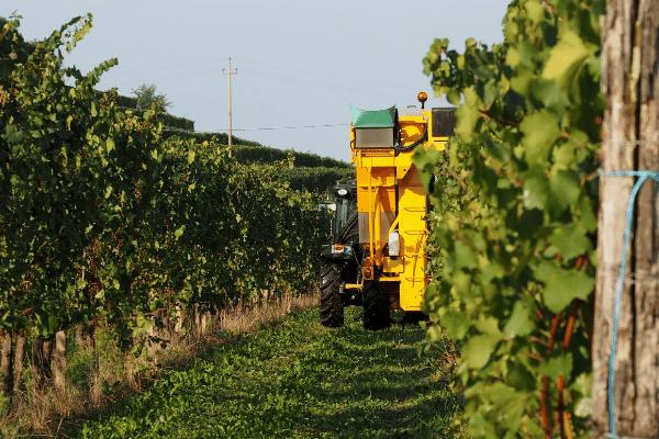 Grapes' Robotic Revolution