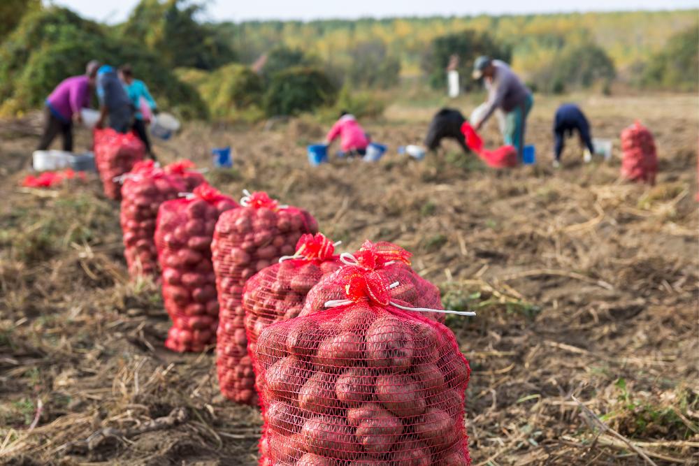 The Farm Labor Legislation Hang Up