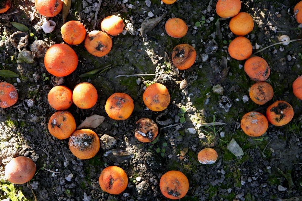 Florida's Bummer Crop
