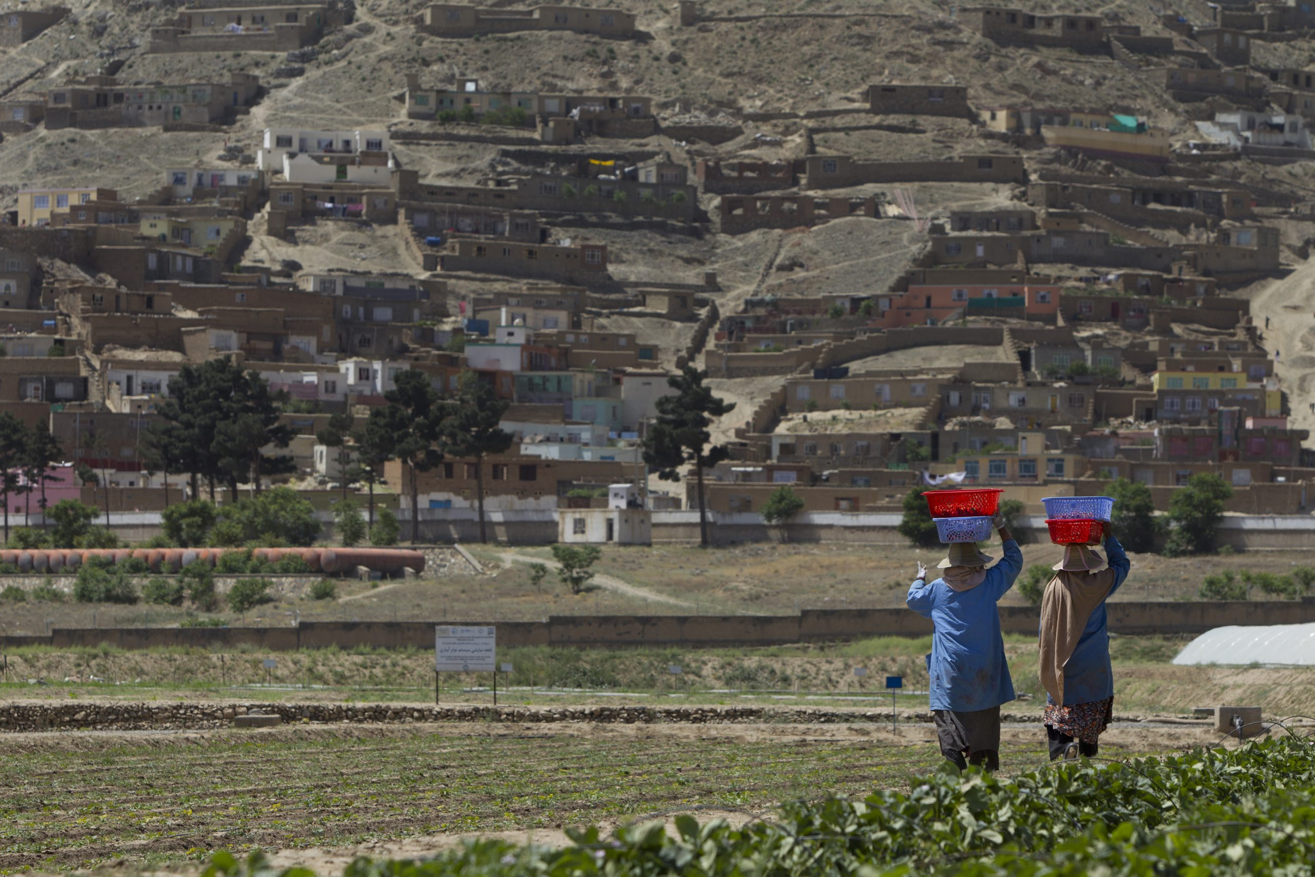 Taliban Takeover Spells Trouble for Farmers