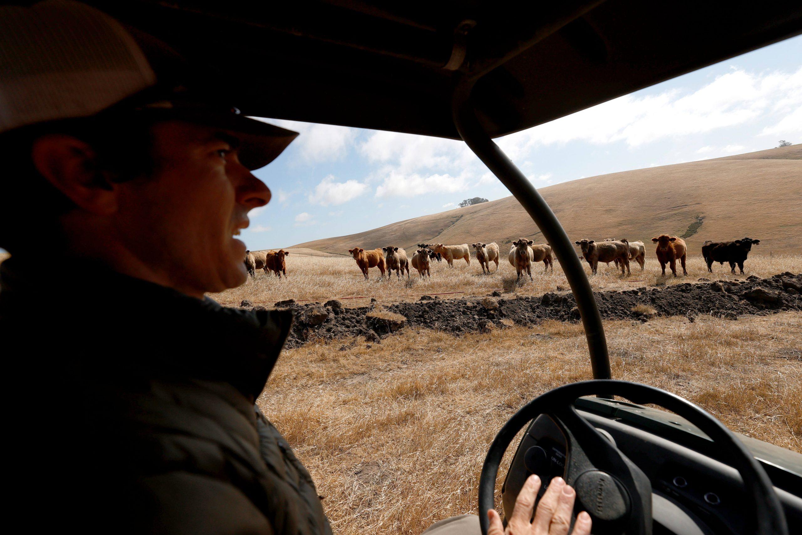 Lending a Helping Herd